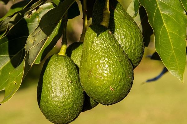 its-avocado-time-2